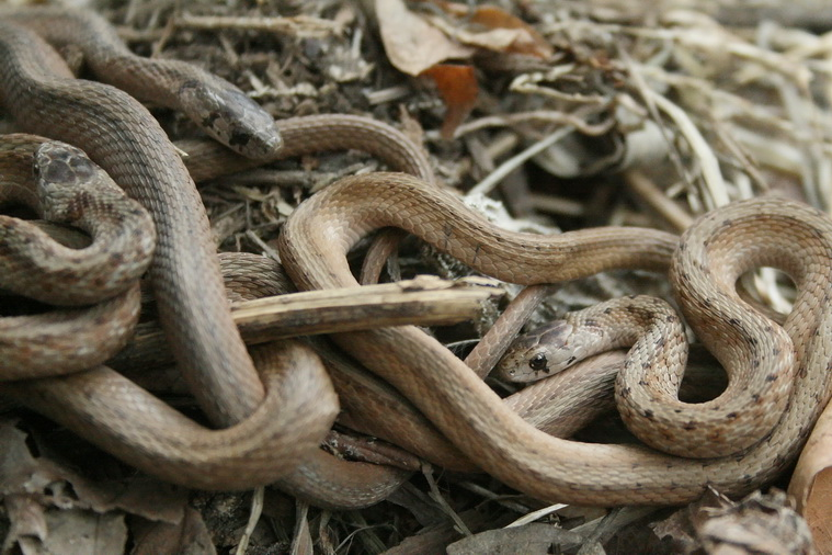 Snakes in the compost pile
