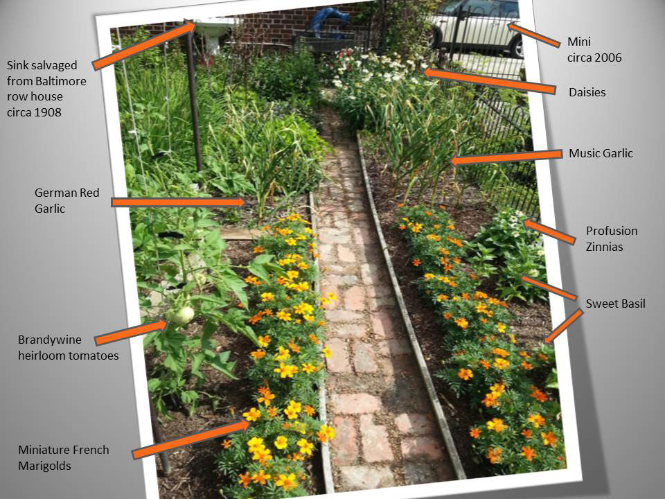 Weedless pathway organically